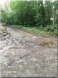SX5857 : Permissive track by jeff collins