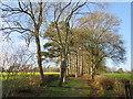 TQ3841 : Public footpath near Felcourt by Malc McDonald