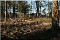 NS5473 : Dead wood by Richard Sutcliffe