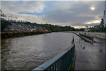 SS9512 : Tiverton : The River Exe by Lewis Clarke