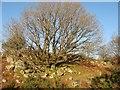 SH8054 : Winter tree by Jonathan Wilkins