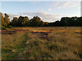SK6268 : An area of heathland within Sherwood Forest by Phil Champion
