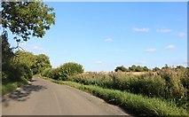 TL4128 : Duck Street, Little Hormead by David Howard