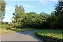 TL4228 : The Street, Furneux Pelham by David Howard