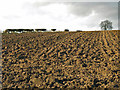 NZ3020 : Ploughed field west of Ketton Lane by Mike Quinn