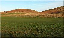NU2422 : Sand dunes, Embleton Bay by Derek Harper