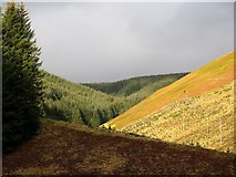 NT8912 : Valley of East Burn, Kidland Forest by Andrew Curtis