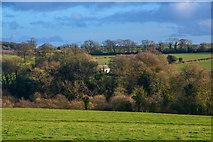 ST2112 : Churchstanton : Grassy Field by Lewis Clarke