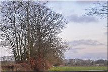 ST2114 : Churchstanton : Grassy Field by Lewis Clarke