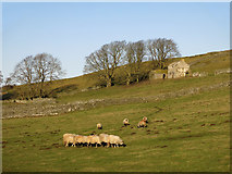 NY9539 : Rough pastures below Shepherd's Cottage by Mike Quinn