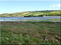 J1022 : Salt marsh on the riverine margin of the Middlebank by Eric Jones
