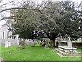 TQ5668 : Ancient yew tree, St. Mary the Virgin church, Horton Kirby by pam fray