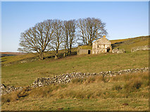 NY9539 : Rough pastures around Shepherd's Cottage by Mike Quinn