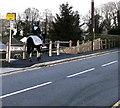 SN8108 : Horse and rider on the Dulais Road pavement, Seven Sisters by Jaggery