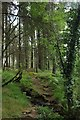 NX3575 : Path through the Braes of Barmore by Graham Robson