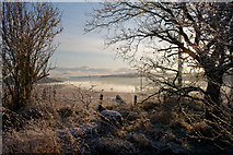 NH6454 : Edge of Tullich Wood, Munlochy by Julian Paren