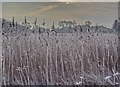 TQ2115 : Frosty grass - Henfield Common, Sussex by Ian Cunliffe