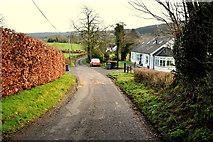 H4681 : Copper beech hedge along Timurty Road by Kenneth  Allen