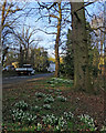 TL4648 : Whittlesford: North Road snowdrops by John Sutton