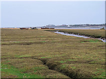 SD3346 : Salt Marsh on the Banks of the Wyre by David Dixon