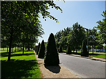 NS5964 : Glasgow Green -  topiary by Stephen Craven