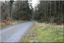 NX4564 : Forest Road to Daltamie House by Billy McCrorie