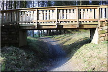 NX4465 : New Bike Trail, Kirroughtree Forest by Billy McCrorie