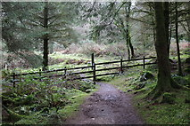 NX4464 : White & Yellow Diversion trail by Billy McCrorie
