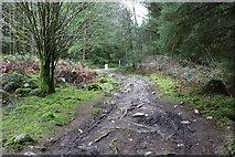 NX4464 : Forest Trail, Kirroughtree by Billy McCrorie