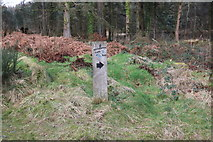 NX4465 : Kirroughtree Lade Path Marker by Billy McCrorie
