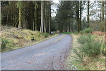 NX4465 : Forest Trail near Little Bruntis by Billy McCrorie