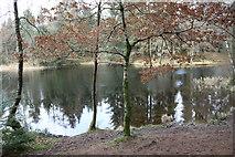 NX4465 : Trees by Little Bruntis Loch by Billy McCrorie