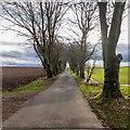 NH9154 : Road to Craggie Farm by valenta