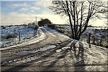 H5559 : Tree shadows in the snow, Garvaghy by Kenneth  Allen