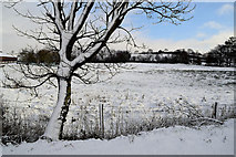 H5559 : Snow covered tree trunk, Tycanny by Kenneth  Allen