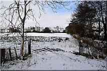 H5559 : An open field, Tycanny by Kenneth  Allen