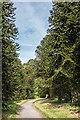 SS6040 : Monkey Puzzle Avenue by Ian Capper