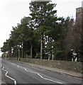 ST1396 : Tree-lined part of Church Road, Gelligaer by Jaggery