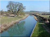 SU2562 : Kennet and Avon Canal by Robin Webster