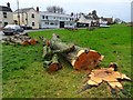SO7944 : Felled lime tree by Philip Halling