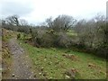 SX5591 : Path and hedgebank on South Down by David Smith