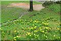 SX9263 : Torwood Gardens during Storm Dennis by Derek Harper