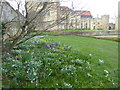TQ5243 : Snowdrops and crocuses at Penshurst by Marathon