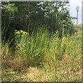 SP2965 : An explosion of wildflowers behind Tesco, Warwick: 1/4 by Robin Stott