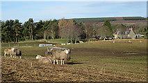 NJ1560 : Easter Hillside by Anne Burgess
