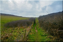 SS2006 : Bude : Grassy Path by Lewis Clarke