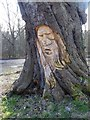 NY9365 : Face in a tree stump by Oliver Dixon
