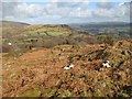 SH7761 : Hillside with bracken by Jonathan Wilkins