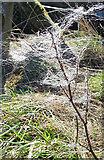 NJ1363 : Trapped Wool by Anne Burgess
