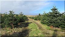 NJ1566 : Way through the Wood by Anne Burgess